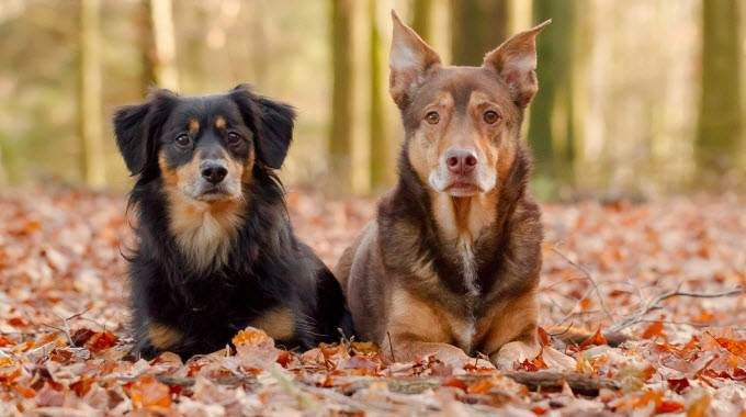 CBD Oil For Dogs: A Miracle Drug For All Dogs