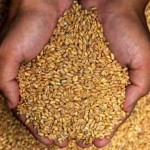 Gluten Update: New Study Identifies Wheat Protein Link To Chronic Health Conditions