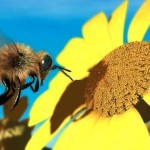 Citizen Solution for Saving the Bees – You Can Help