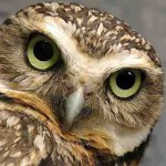 There's An Owl In My Living Room ~ How Symbols Help You Evolve