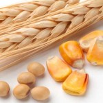 Simple Food Tips for Improved Brain Function