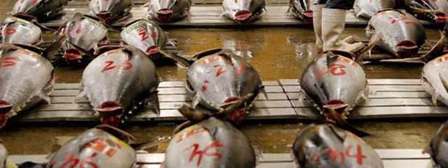 Radiation in Tuna Triples After Fukushima, New Study Says