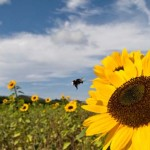 Victory! Fish and Wildlife Service to Phase Out Neonicotinoids