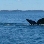 Threatening Whales and Planet, US Opens Up Offshore Oil Exploration