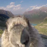 Cheeky Marmot Photobombs, Ruins Greenpeace Timelapse Video