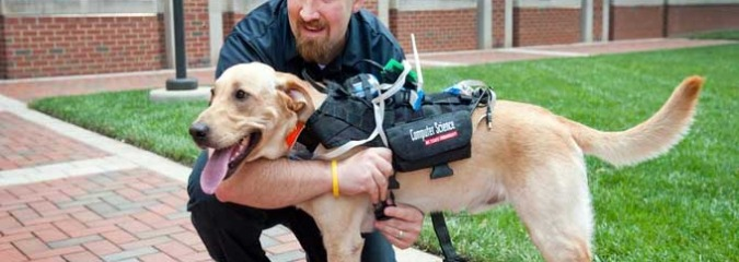 New Technology Aims to Improve Communication Between Dogs and Humans