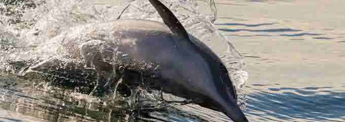 Wild Dolphins Exchange Names When They Meet At Sea.
