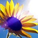 Solar Frequencies Do More Than Boost Your Vitamin D ~ They Activate Your DNA!