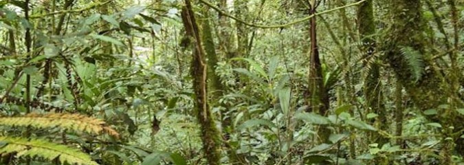 Good News on Forests and Carbon Dioxide