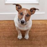 7 Pearls of Puppy Wisdom: What We Can Learn From Our Furry Friends