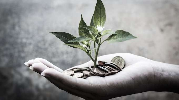 abundance-money-seedling