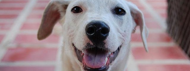 Study Shows Loving Eye Contact Between Dogs & Humans Benefits Both