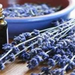CAUTION: 3 Reasons Why Friends Don't Let Friends Ingest Essential Oils