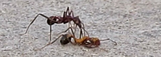 Why Ants Carry Their Dead and Other Fascinating Facts