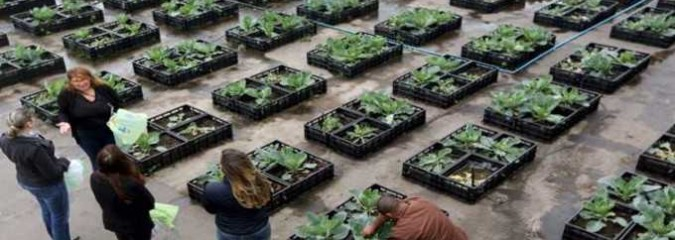 Brazil Shopping Mall Recycles Their Food Waste into Thriving Rooftop Garden for Employees