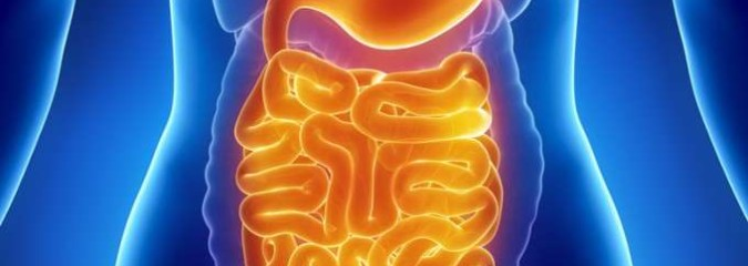 Why The Microbiome Is So Vital To Your Health