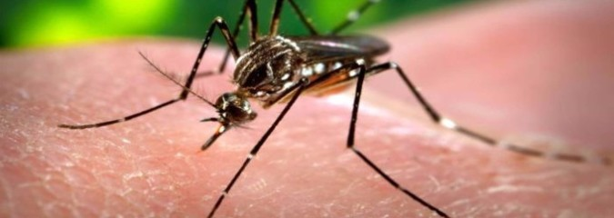 Dr. Mercola Pulls Back the Curtain on Zika Virus Propaganda (Get The Facts)