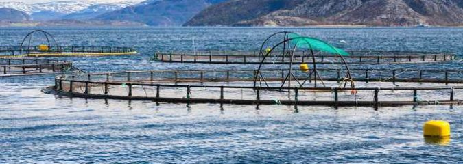 How Fish Farms Destroy the Ecosystem and Threaten Your Health