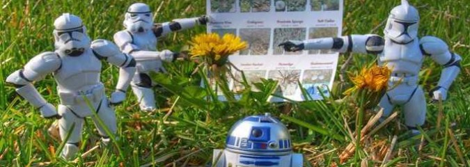 6 Homemade Herbicides That Kill the Weeds Without Killing the Earth