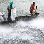 Eating Fish Can Be Bad for Your Health: Alarming Fish Industry Facts