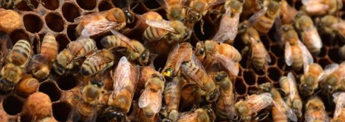 Demanding Ban on Deadly Pesticides, Advocates Drop Millions of Dead Bees on EPA Doorstep