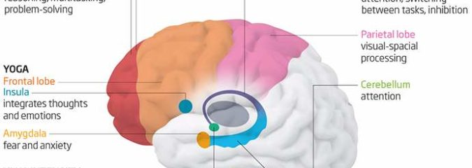 New Finding: Different Types of Exercise Affect Different Parts of Your Brain
