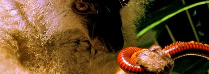 Animals Getting High: Weird Nature ― Peculiar Potions [Documentary]