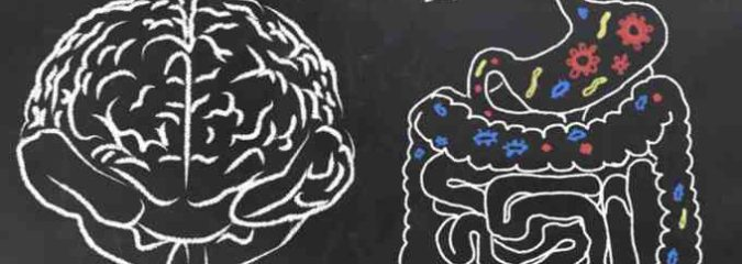 The Natural Connection Between Your Gut and Brain and Ways To Improve It