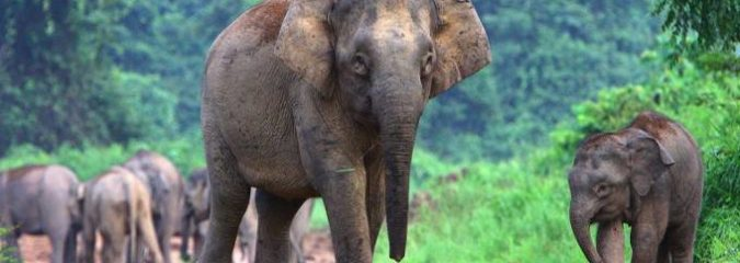 Good News! First Sanctuary For Abused Circus Elephants Opens In Brazil