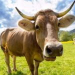 Revolutionary New Company Creating Meat Without Slaughtering Animals