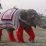 People Are Knitting Giant Sweaters For Elephants To Keep Them Cozy
