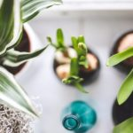 10 House Plants That Actually Detoxify and Freshen Up the Air In Your Home