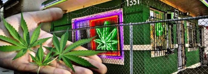 Landmark Study Shows Legal Marijuana Sales Reduce Crime
