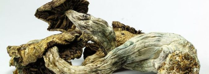 "Psilocybin Appears To ""Reset"" Brain Activity of Depressed Patients – Stunning Results"