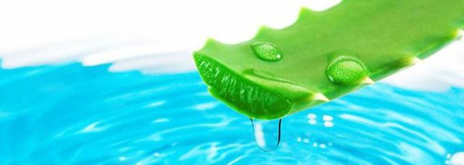 How You Can Benefit from Drinking Aloe Vera Juice