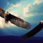The Incan Prophecy of the Eagle and the Condor