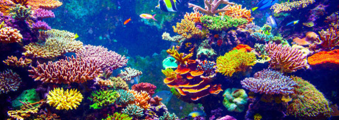 Restoring Coral Reefs Is Possible and Surprisingly Fast