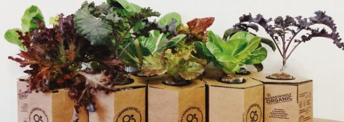 Affordable 'Plant Pod' Grows More Lettuce In One Room Than A Half-Acre Plot
