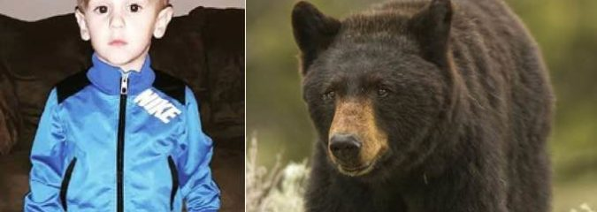 """Black Bear Protects Missing Three-Year-Old Casey Hathaway For Two Days – """"a Friend In the Woods"""""""