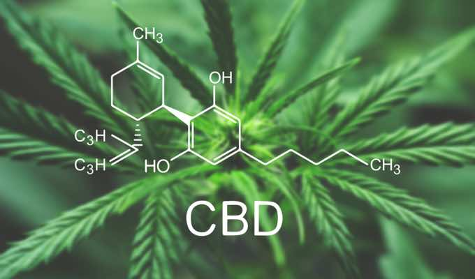 The Popular Ingredient We're All Talking About: All About CBD