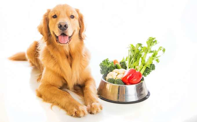 Should You Care About Sustainability in Your Pet Food?